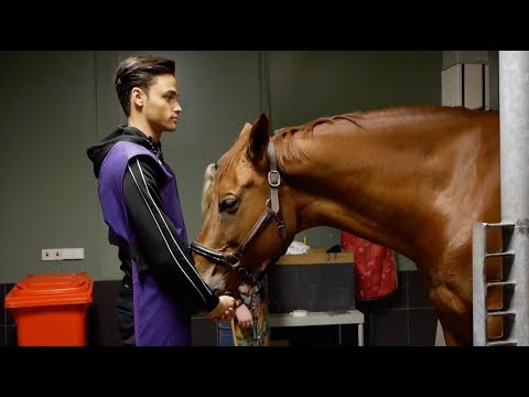 Xxx Mp4 FINDING OUT WHATS WRONG WITH MY HORSE MATT HARNACKE 3gp Sex
