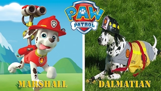 Paw Patrol Characters in Real Life