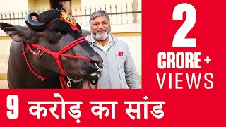India's Super Bull Yuvraj - Father of 150,000 Calves - OMG! Yeh Mera India