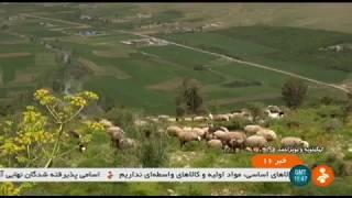 Iran Dairy farming & Milk production, Kohgiluyeh & BoyerAhmad پرورش گاوشيرده كهگيلويه و بويراحمد
