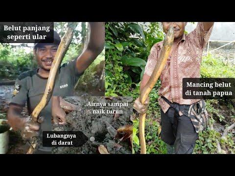 Xxx Mp4 Mancing Belut Di Rawa Rawa Papua Besar Dan Panjangnya Diatas Rata Rata 3gp Sex