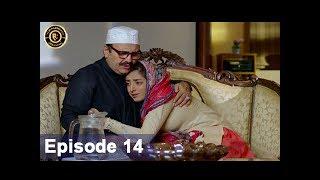 Shiza Episode 14 - 16th June  2017 - Sanam Chaudhry - Aijaz Aslam - Top Pakistani Drama