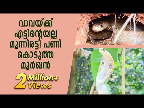 Hostile Cobra traps Man | Vava Suresh | Snake Master | Kaumudy TV