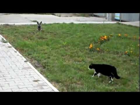 gato vs perro impresionante