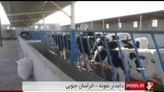 Iran Boshrouyeh county, Cattle farming پرورش دام گوشتي شهرستان بوشرويه ايران