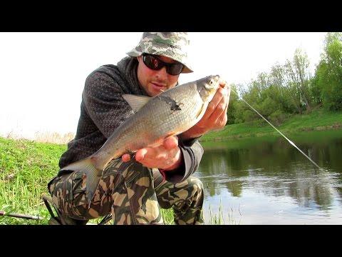 как ловить рыбу на реке пшеха