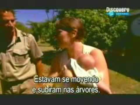 Discovery Channel Mamba Negra Parte1de5 .