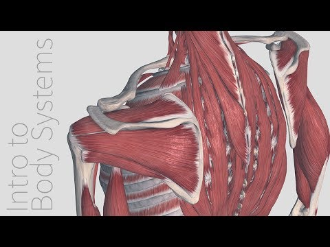 Introduction to the Muscular System - Animated Tutorial | Complete Anatomy