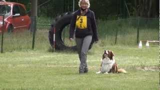 Hundeschule Potsdam - VDH Begleithundeprüfung (BH/VT) - Australian Shepherd Sammy