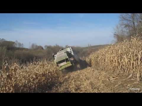 Agroszász Kft. 2010 Kukorica aratás