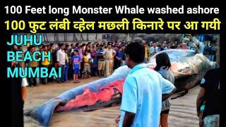 29th Jan '16 Monster Whale Fish washed ashore at Juhu Beach Mumbai near J W Marriott Hotel