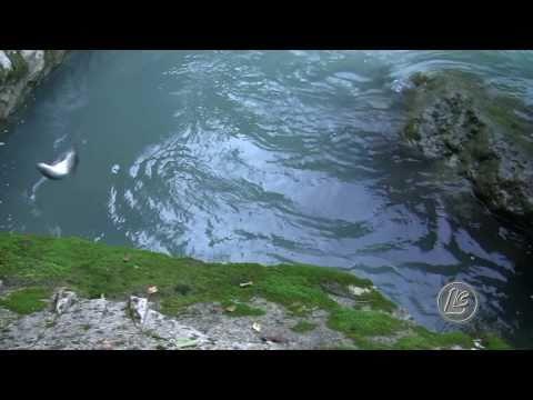 Pesca alla trota di torrente in Agordino