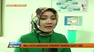 Wali Kota Bandung Dirawat karena DBD