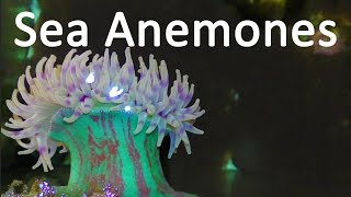 SEA ANEMONES! | 10 Insane Facts about Sea Anemones