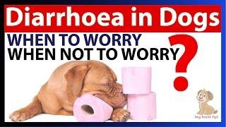 Dog Diarrhea Causes, Symptoms, and Treatment (dog health tips)
