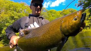 Salmon River  Pulaski NY Fly Fishing  9,23,18