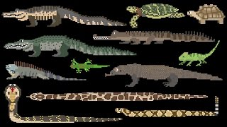 Reptiles - Snakes, Lizards, Crocodilians & Turtles - The Kids
