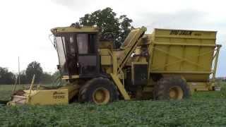 GREEN BEANS HARVEST: 2x OXBO PIXALL - Big Jack - Italy 2014