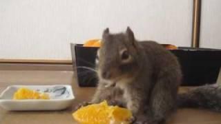 走ってはネーブルを食べる -  He run and eat navel oranges alternately.