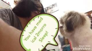 Strict dog part 1