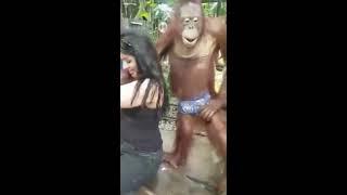 fuuny girl with gorilla taking pics in zoo hahahaha...