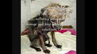 Animal abuse and cruelty success stories