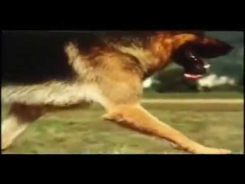 Dingo vom Haus Gero, The Best Mover - Poetry in Motion