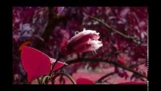 Beautiful Pashto Naat Hasan Husain Pa Chighu Zhari Rabba
