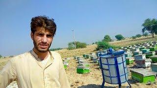 Honey Farming in Pakistan BeeKeeping Business Honey Business Bee Farm Profit Info