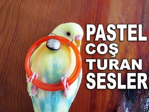Kuşunuzu Coşturacak Muhabbet Kuşu Sesleri