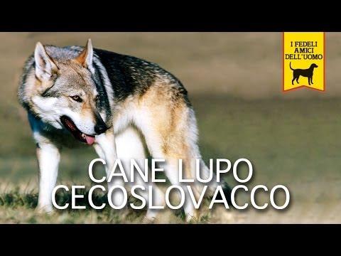 CANE LUPO CECOSLOVACCO trailer documentario