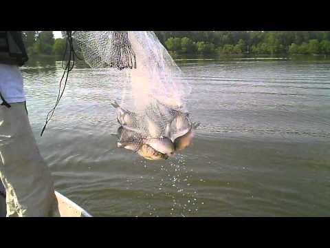 Cast netting Shad Arkansas River