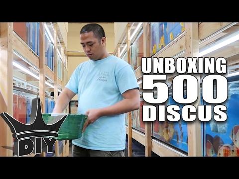 UNBOXING 500 DISCUS aquarium fish