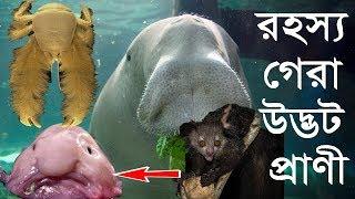 Most Strange Bizarre Animals in The World ! Mysterious world bangla !