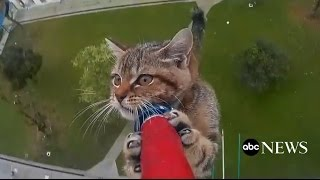 Amazing Kitten Rescue Time-Lapse Video