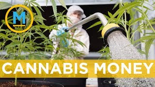 Where will the money from cannabis tax go? | Your Morning