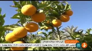 Iran Mohtaram-Abad village, Nik-Shahr county, Agriculture كشاورزي روستاي محترم آباد نيكشهر