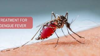 Is Dengue Fever Contagious- How Is Dengue Contracted- Incubation Period