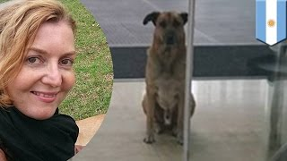 Adopt a dog: Flight attendant adopted stray dog who waited for six months - TomoNews