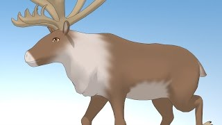 【MMD】 Rudolph ルドルフ 【モデル配布あり】reindeer mmd model distribution dl
