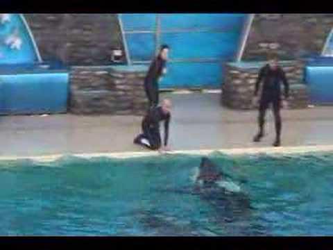 Shamu Show Incident Nov. 15 2006
