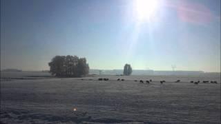 MAM - Crushed Ice (Original Mix)