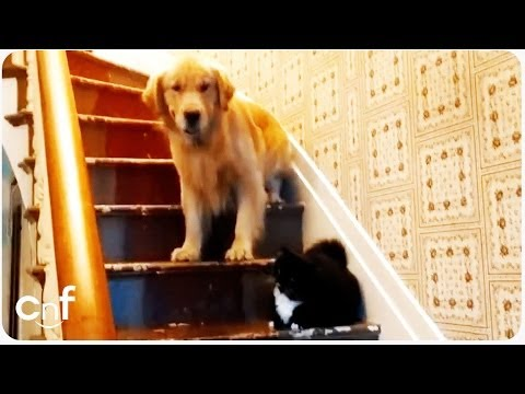 Dog Afraid of