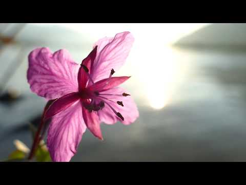 Xxx Mp4 Creative Commons With Attribution Nature Video Fireweed Alaska 4K 3gp Sex