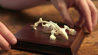 Exploring the Mole's Bizarre Skeleton | Secrets of Bones | BBC Earth