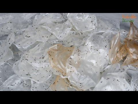 Steamed Papad | Athara varche Papad | अथारा वरचे पापड
