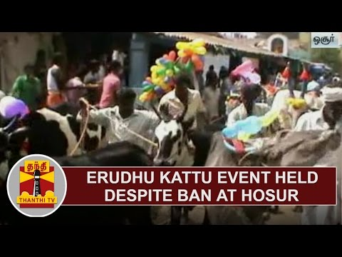 'Erudhu Kattu' event held despite ban at Hosur   Thanthi TV