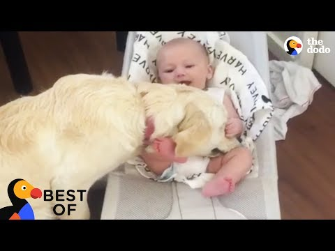 Xxx Mp4 Animal Videos That Will Make You Happy Funny Cute Animals 2018 Best Of The Dodo 3gp Sex