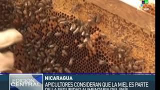 5992 economics apiculture TeleSUR Nicaragua exportará cera de abeja por primera vez 2015 08 19
