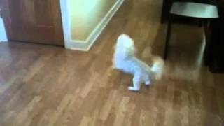 Coco on Catnip